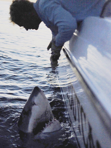 Massive Great White Shark Caught off of South Carolina Coast| Real People Stories