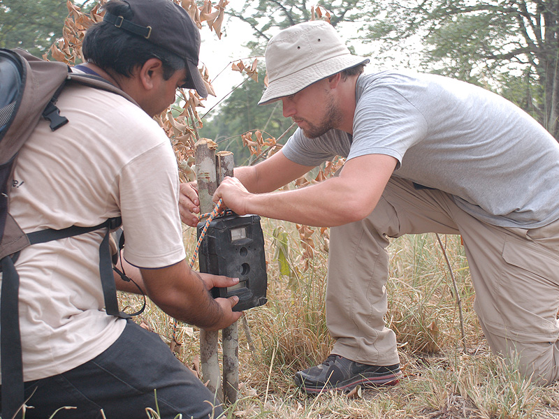 Leonardo DiCaprio Fights to Save World's Wild Tigers