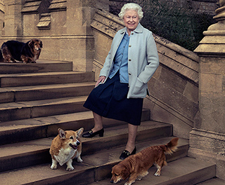 Game of Thrones Meets Queen Elizabeth Meets Corgis (and Dorgies!) in This One Amazing Photo