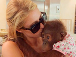 Paris Hilton Apologizes to Animal Activists From United Nations: 'I Do Agree With What They're Saying'