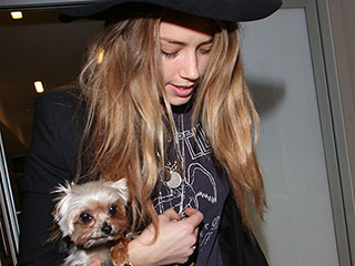 Judge Denies Request to Protect Amber Heard's Dog, Pistol, after Hearing on Domestic Violence Allegations