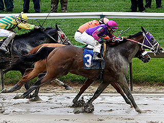 Two Horses Dead Within First Four Races at Preakness