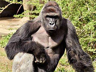 'It Saddens Me to No End' – Hollywood Reacts to Controversial Killing of Endangered Gorilla at Cincinnati Zoo