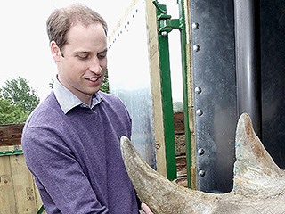 Prince William's Surprise Baby Joy! The Royal Is 'Delighted' After Endangered Rhino He Protected Gives Birth in Africa