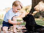 Why the Photo of George Feeding Lupo Ice Cream Is Causing a Meltdown