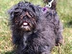 10 Amazing Rescue Dog Transformations