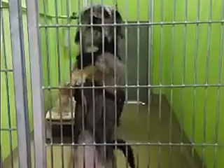 VIDEO: Dog's Dance Moves Help Her Get Noticed at Florida Shelter