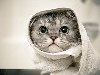 New Jersey Cat's Head Stuck for Days Inside Peanut Butter Jar