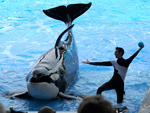 SeaWorld Is Stopping All Kissing and Dancing in Orca Performances