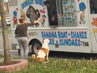 WATCH: Pit Bull Patiently Waits His Turn for Ice Cream
