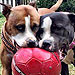 Adopt Me! Dogs, Cats, and People are All Pals of Petunia