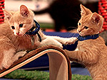 90 Adoptable Cats Star in This Year's Kitten Summer Games