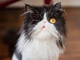 People Are Eating Up SpaghettiO the One-Eyed Cat on Instagram