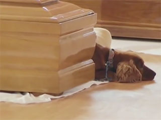 WATCH: Loyal Dog Sits Beside Coffin of Owner Killed in Earthquake