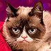 Grumpy Cat Joins Cast of Broadway's 'Cats'