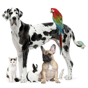 dalmation, parrot and other pets