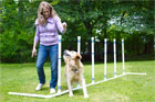 how to build a pet agility course