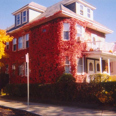 aggressive vines on the East Boston show house