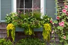 Plant a Better Window-Box Garden