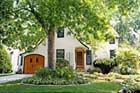 All About Shade Trees