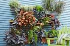 How to Build a Living Wall Vertical Garden