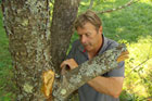 How to Hand-Prune Trees