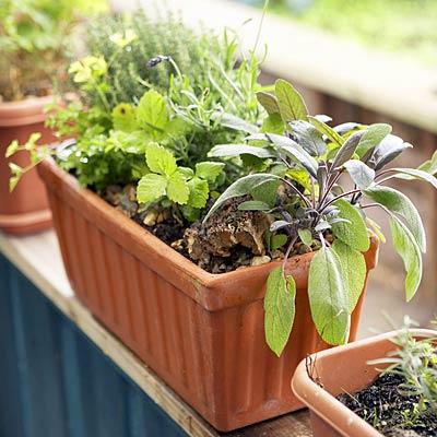 crescer-seu-ervas