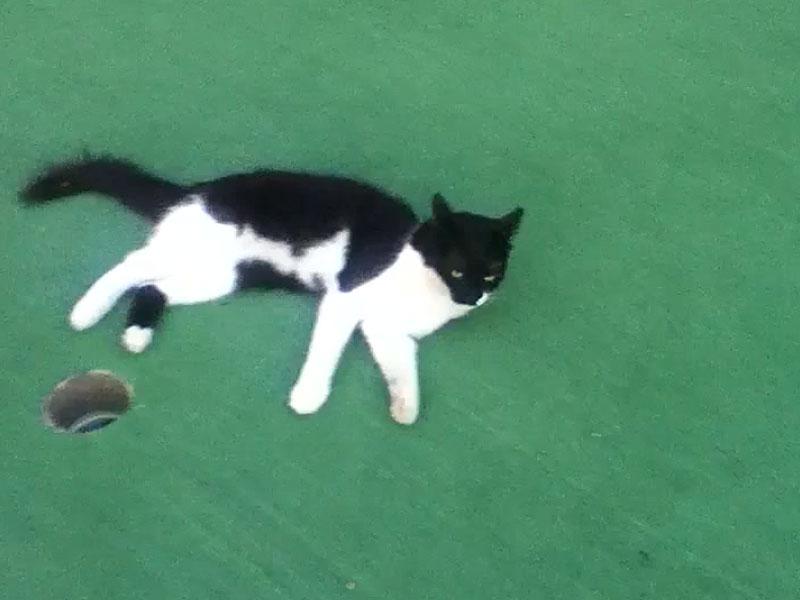 Tuxie on golf course